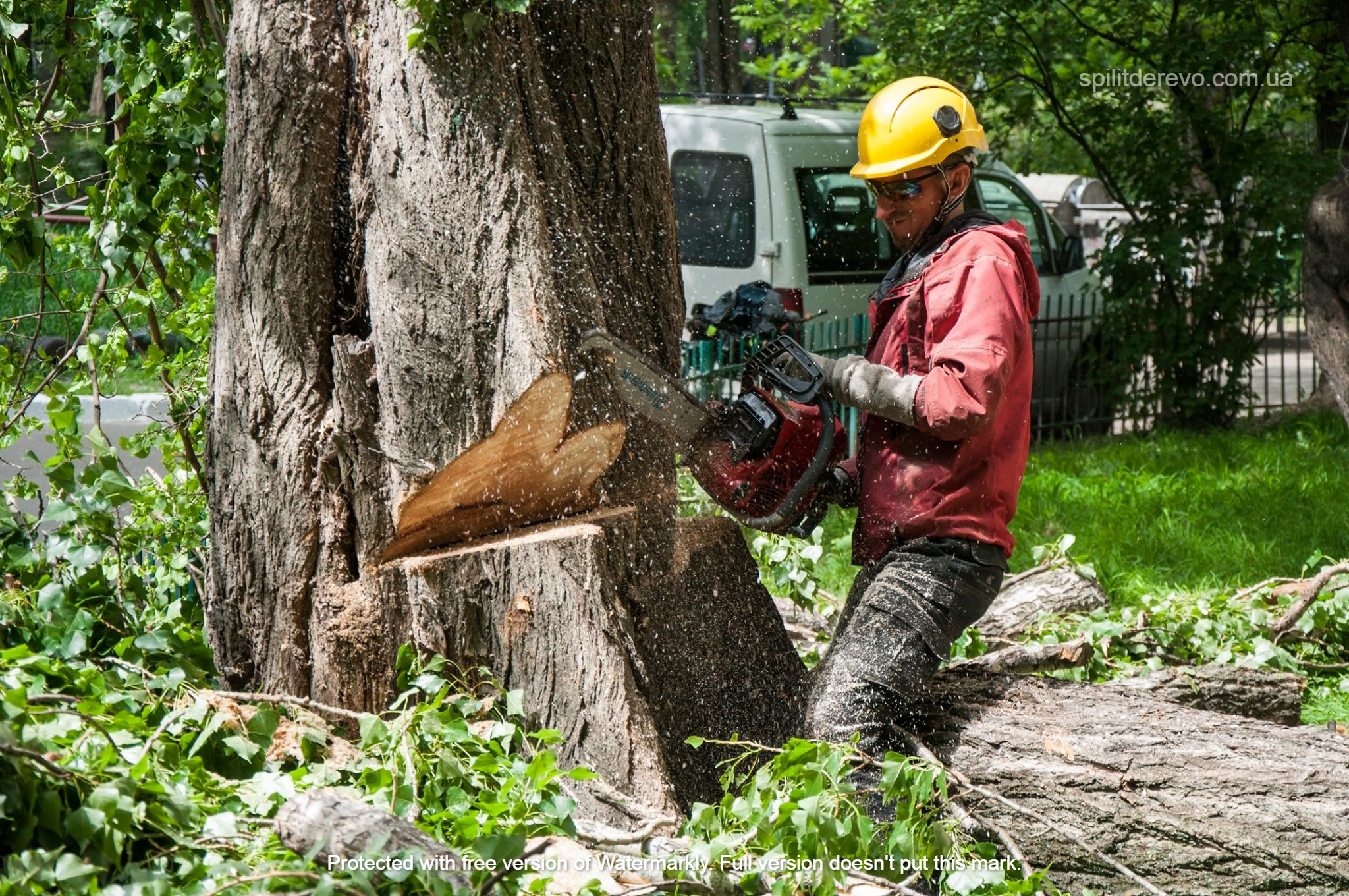 услуги по спилу деревьев киев